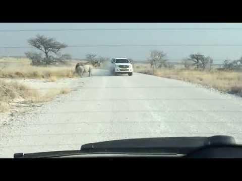 VÍDEO: Rinoceronte atacando Toyota Hilux