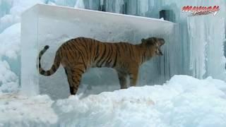 বরফে আটকে পরা ৫টি রহস্যময় বস্তু || Animals Found Frozen In Ice