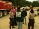 SPCA Wildfire Animal Rescues in Big Sur, CA