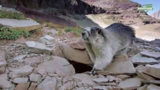 Строительные проекты в мире животных. Серия 2