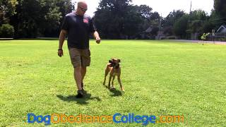 Mico Off Leash Dog Training Obedience College Memphis
