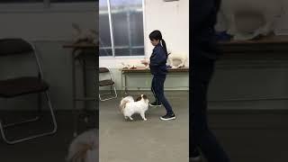 動物専門学校 トリマー 動物看護師 アクアリウム 動物のお仕事 動物系学科1年生のクリッカートレーニング⑨ thumbnail