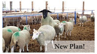 Breeding Ewes In Season (BACK TO BASICS):  Vlog 101