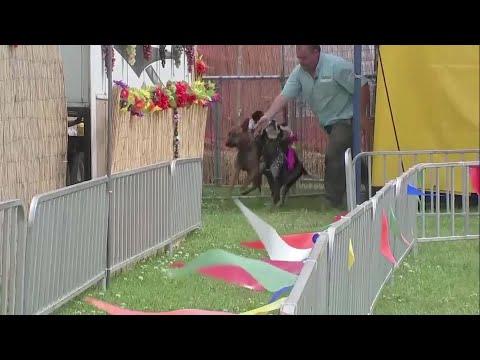'Banana Derby' Where Monkeys Ride Dogs, Race Around Track