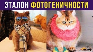 Приколы. ЭТАЛОН ФОТОГЕНИЧНОСТИ   Мемозг #119