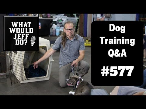 dog-training---dog-lunges---fearful-dogs---what-would-jeff-do?-q&a-ep.577-(2019)