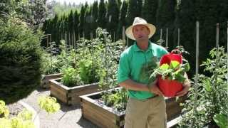 Vegetable Series: Early Summer Vegetable Harvest