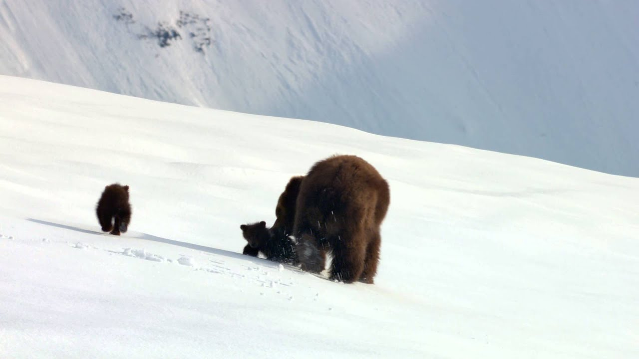 Медведи - Трейлер