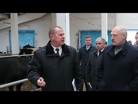 Это же Освенцим! Лукашенко в коровнике уволил губернатора Могилевской области
