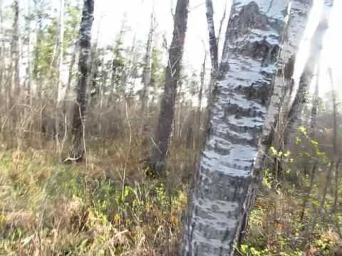 Saskatchewan Hiding Horribly Sick trees - Across Canada Reports