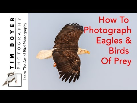 How To Photograph Eagles And Birds Of Prey
