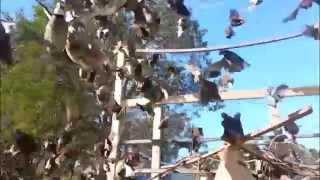 Quail Flight Cage