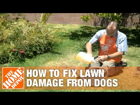 How To Fix Lawn Damage from Dogs | The Home Depot - YouTube