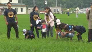 【HTBニュース】地震で被災した厚真町の復興を米作りから応援