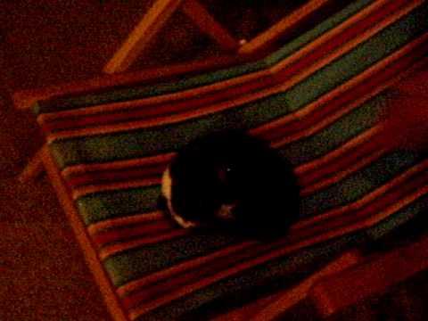 Estate 2007 - S.Maria di Leuca - Gatto 2 - Post Festa di Compleanno di Alby - Yo!