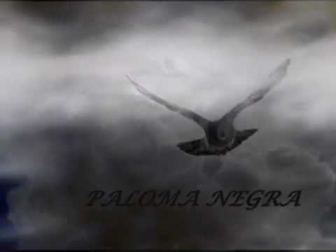 Resultado de imagen para paloma negra