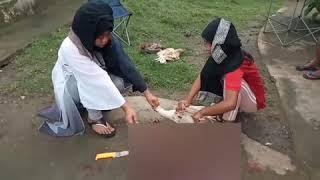 Animal Sacrificed On Eid Ul Adha