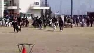 関西BWPでのリレーの模様です。 珍しい犬種も居ます。