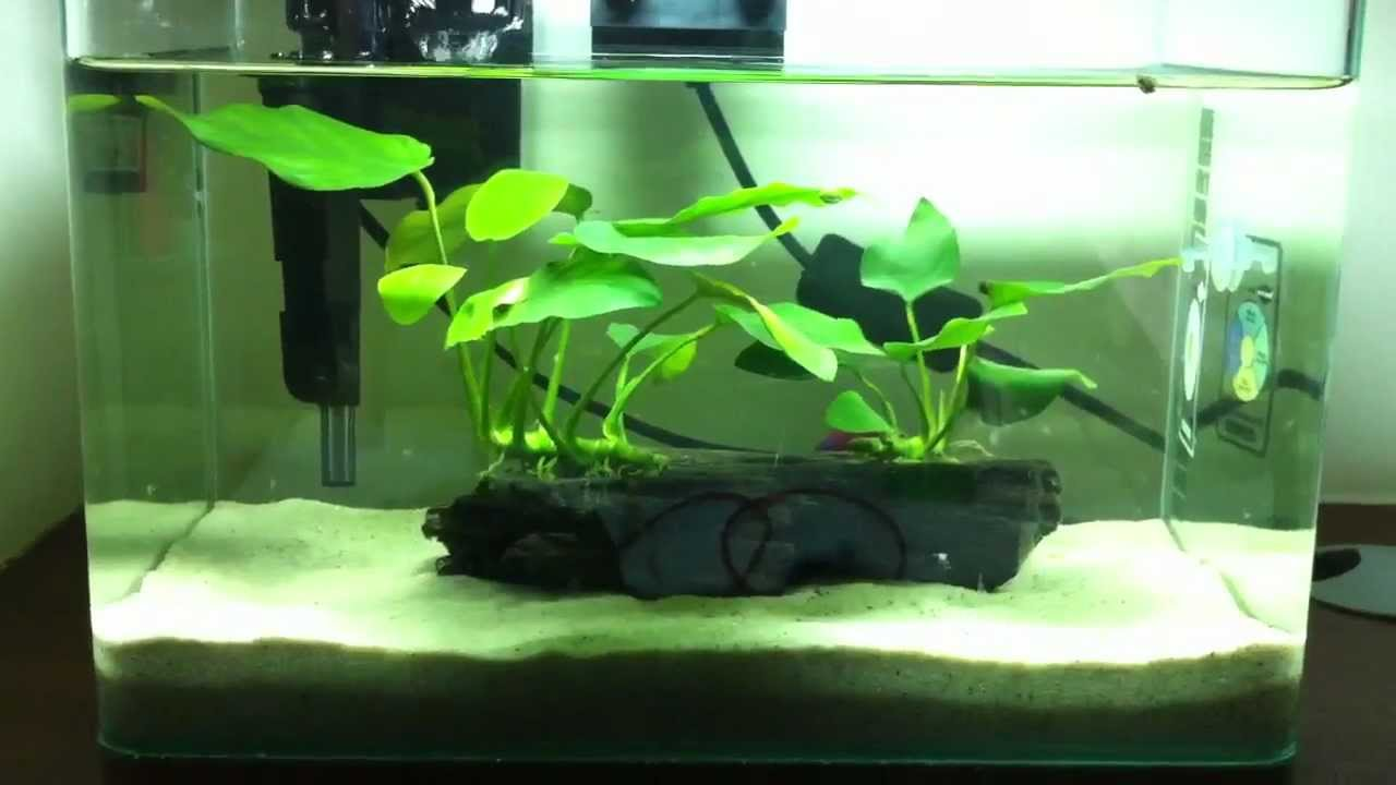 Simple easy betta fish tank setup youtube for Easy aquarium fish