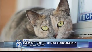 Maui Humane Society plans to close overnight receiving kennels