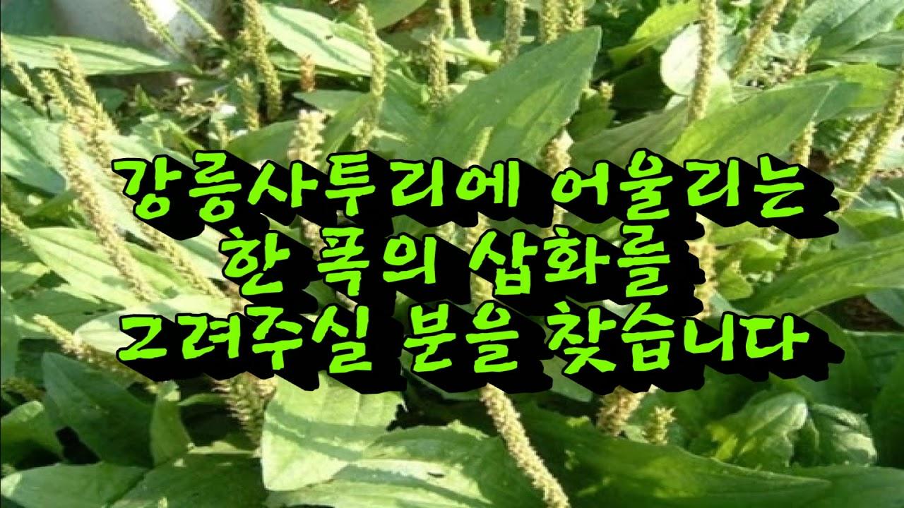 봄날 강릉의 뺌장우