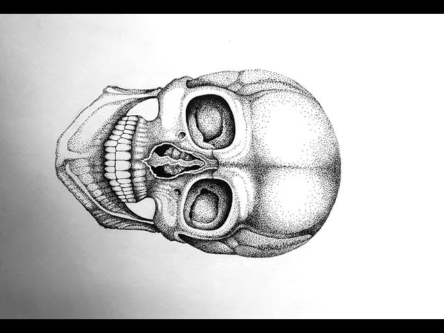 DRAWING TUTORIAL: How to Draw a Skull