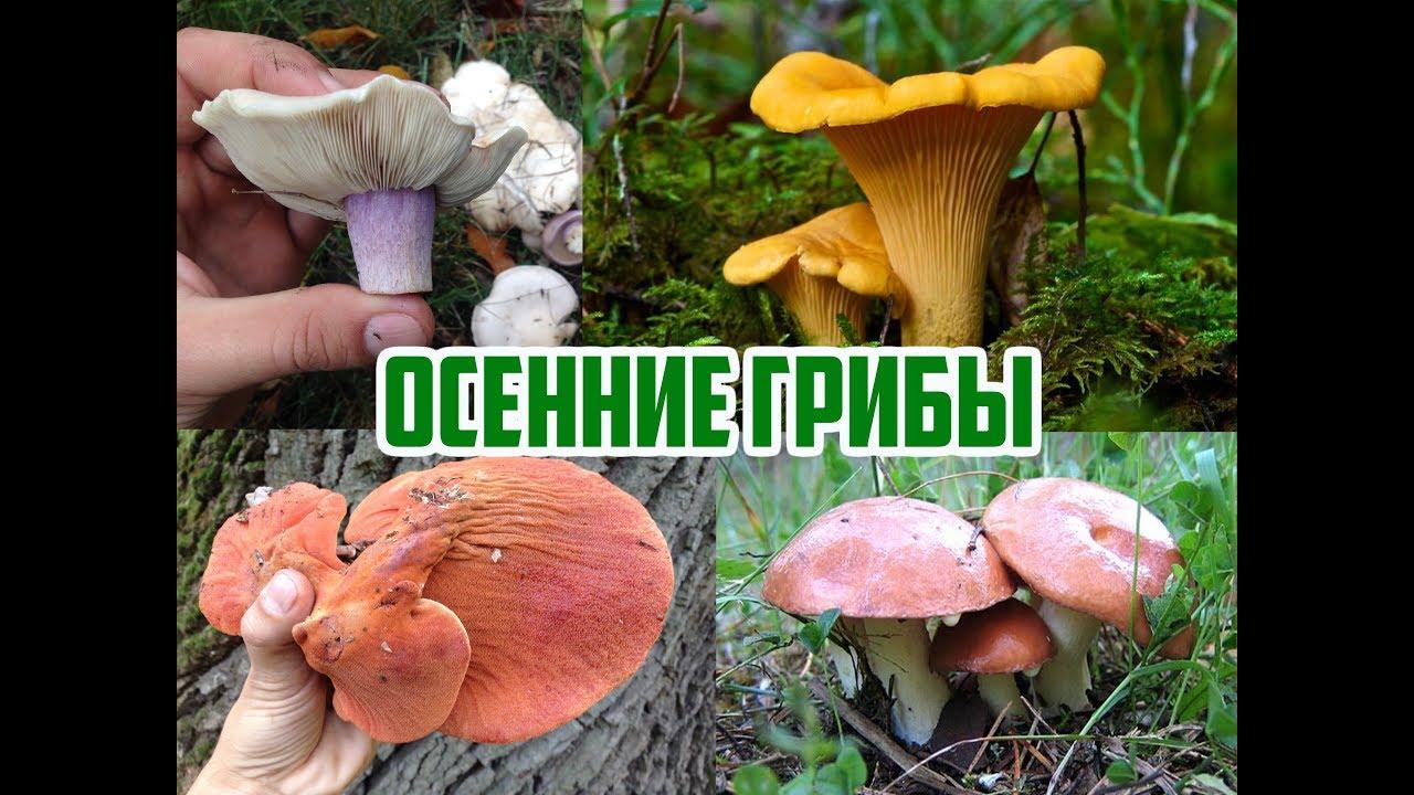 Осенние грибы / Виды осенних грибов / Прогулка в лесу ...