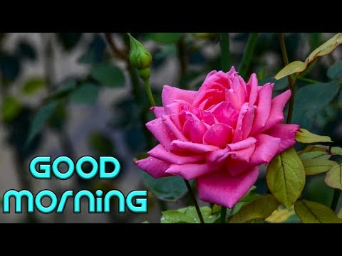 good morning video song for WhatsApp download