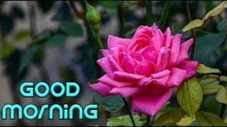 good-morning-song-for-whatsapp-download