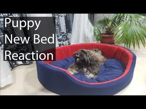 Unboxing: New Huge Bed for Lhasa Apso Puppy(Dexter)