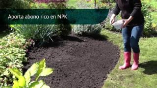 18 Cómo crear un parterre de plantas perennes