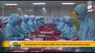 Vietnamese shrimps suffer from DOC anti dumping rates - Source VTV4