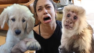 DAVID DOBRIK SURPRISING LIZA KOSHY AND THE VLOG SQUAD WITH CUTE ANIMALS