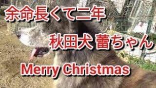 皆さまのお陰で蕾は4回目のクリスマスを迎えれました。 ありがとうござ...