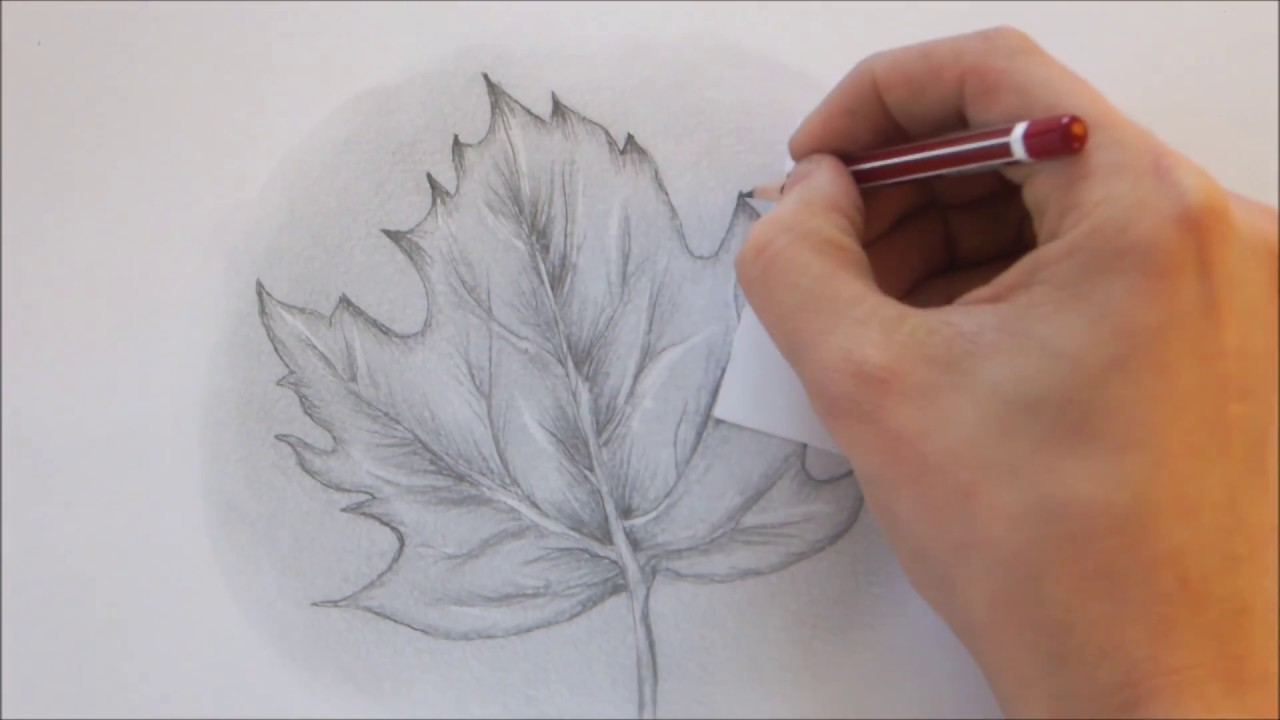 How to draw a leaf step by step realistic drawing youtube