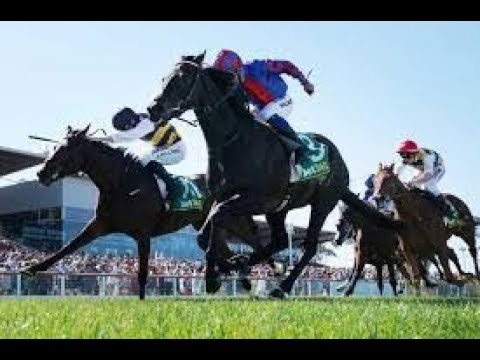 2019 SEVEN Sports _ Horse Racing Geelong Cup Day