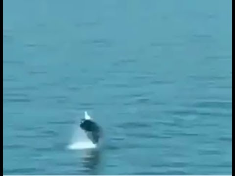 Whale Spotted Making A Splash In English Channel