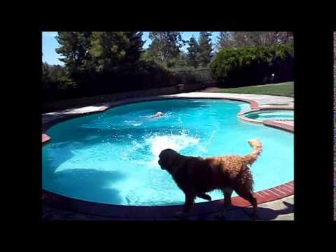 Swimming Dogs July 2014