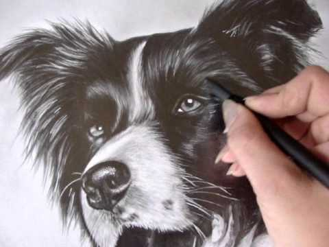 border collie ejty 2016 realistic pencil drawing music derby rock