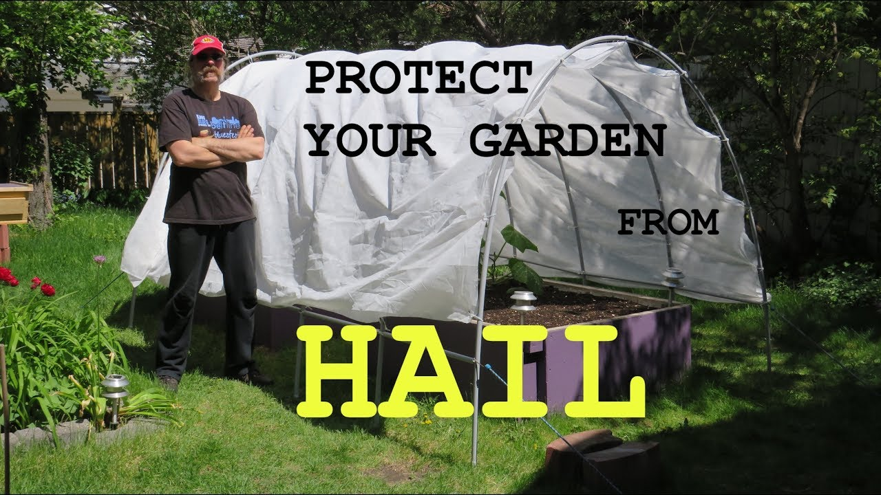 SHIELDS UP! - Protect your garden from a Calgary HAIL STORM - DIY  instructions to make a hail shield