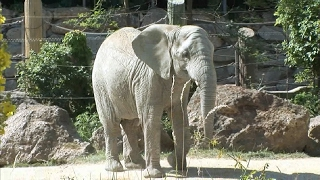 Animal Facts - Learn fun Facts about Animals