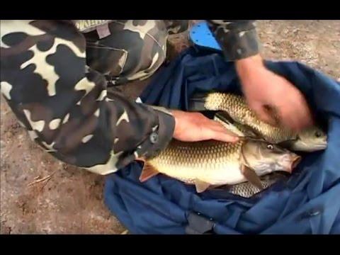 рыбалка в украине ловля карпа видео