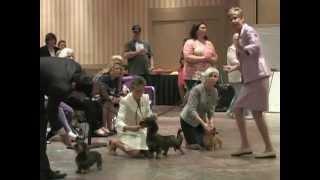 Hundeleben Zis Und Zat Of Brownwood Sw Awarded Winners Dog!