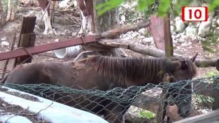 Maltratan a un caballo en las fincas de Cozumel