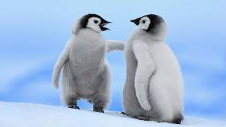 Pingüinos mas de comunes tipos