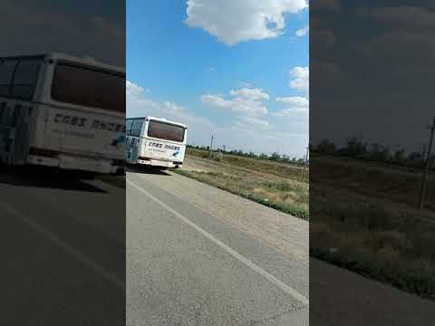 Кыргыздар коргуло видеону