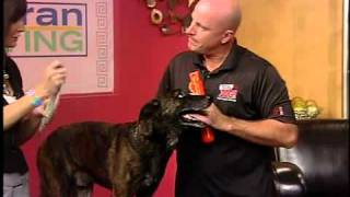 Dog Trainer Tips To Cure Common Dog Behavior Issues. Pt1