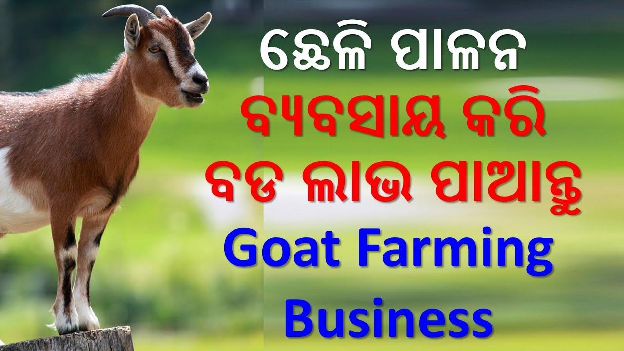 Goat Farming Business in Odisha