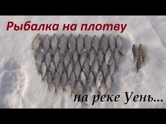 зимняя рыбалка на чаусе