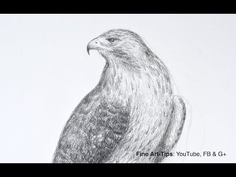 How To Draw A Falcon (Red-Tailed Hawk) - Narrated
